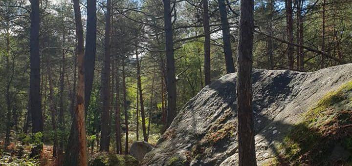 Retour en octobre 2020 – Sortie à Fontainebleau